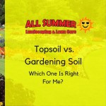 Topsoil vs. Gardening Soil – Which One Is Right For Me?