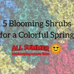 Here are 5 blooming shrubs that are perfect for spring