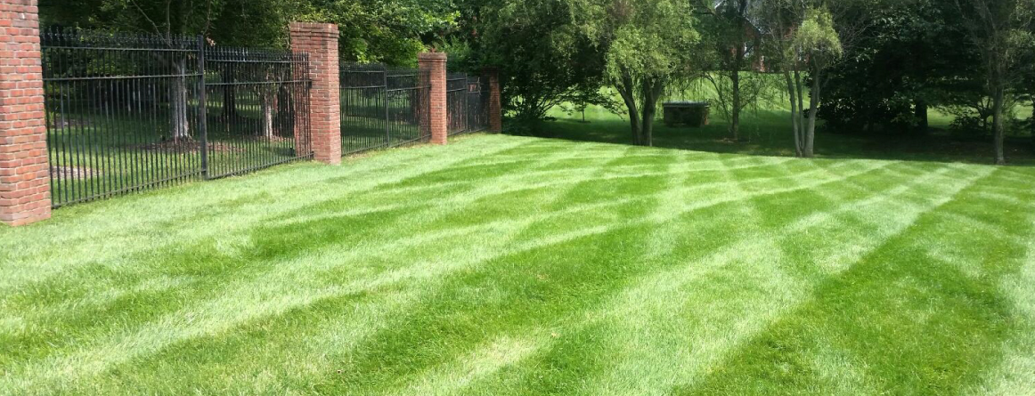 Professional Home Lawn Care