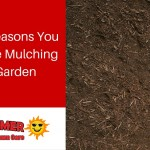 4 Great Reasons You Should Be Mulching Your Garden